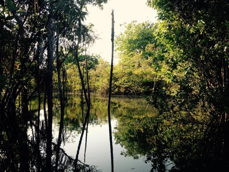 Floresta Encantada-Alagada