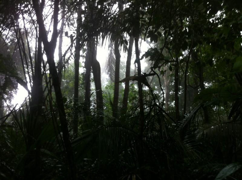 Jamaraquá(FLONA do Tapajós)